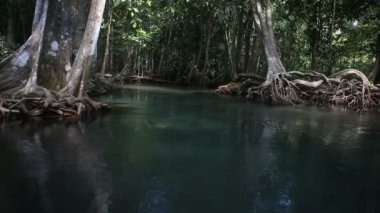 Clear water flows among the mangrove roots — Stock Video