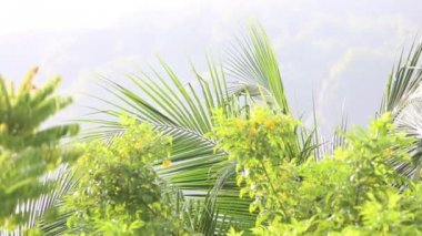 Green branches in tropics — Stockvideo