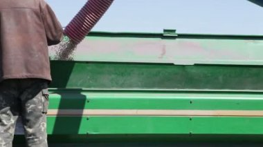 Grain poured into drill — Stock Video