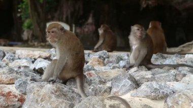 Monkeys sit on the rocks — Stock Video