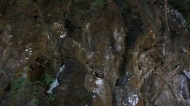 Monkey crawling  along  cliff — Stock Video