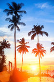 Sunset on a tropical beach. — Stock Photo