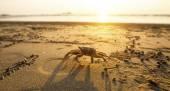 Crab on sand — Stock Photo