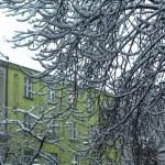 Tree branches under snow — Stock Photo #63762899