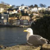Seagull sits rear river — Stock Photo