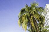 Palm Tree in Rio de Janeiro, Brazil — Foto Stock