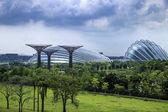 The Gardens in Singapore, Asia — Stock Photo