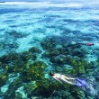 The Great Barrier Reef in Queensland State, Australia — Stock Photo #56057543