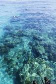 The Great Barrier Reef in Queensland State, Australia — Stock Photo