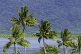 Tropical landscape in Cairns, Queensland, Australia — Stock Photo
