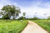 Rural scene in Pantanal, Brazil — Foto Stock