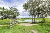 Rural scene in Pantanal, Brazil — 图库照片