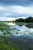Pantanal landscape, Brazil — Stock Photo