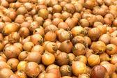 Onions background — Stock Photo
