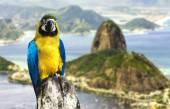 Blå och gula macaw — Stockfoto