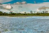 Pantanal tropical wetland areas — Stock Photo