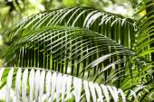 Plants in Amazon Forest — Stock Photo