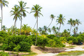 Palm Trees at Aldeia dos Hippies in Bahia, Brazil — Stockfoto