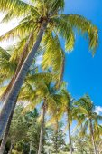 Tropical image with palm trees in the blue sunny sky — Stock Photo