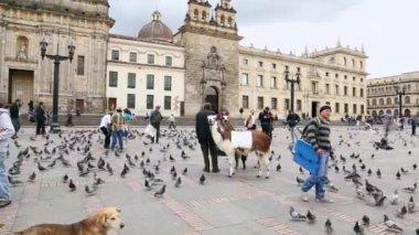Many pigeons on Bolivar Simon Square in Bogota — Stock Video