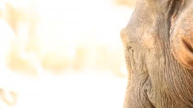 Close-up of a Cute Elephant — Stock Video