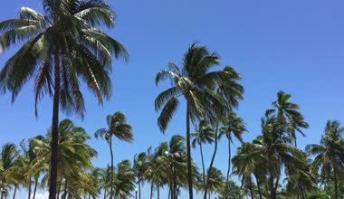 Palm Trees in Miami Beach — Stock Video