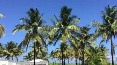 Palm Trees in Miami Beach — Stock Video