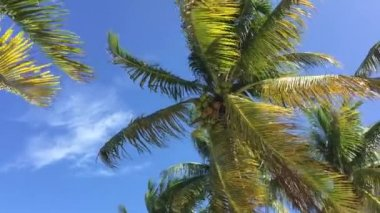 Tropical scene with palm trees — Stock Video