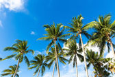 Tropical palm trees in the blue sunny sky — Stock Photo