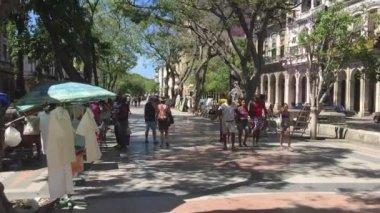 Beautiful tree-lined street in Havana, Cuba — Stock Video
