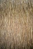 Thatch roof — Stock Photo