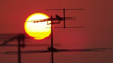 Television antenna with a birds — Stock Video