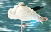 White color swan bird — Stock Photo