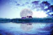 Forest river with tiger isolate on dark cloudy and moon background — Stock Photo