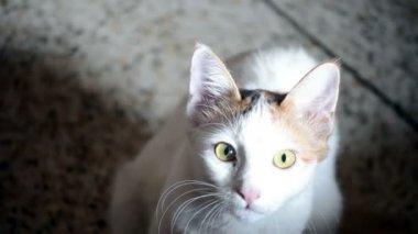 Closeup of a young cat — Stockvideo