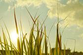 Sonbahar yeşil çim gökyüzü üzerinde — Stok fotoğraf