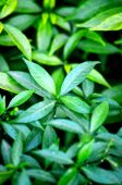 Natural leaf background captured from nature — Stock Photo