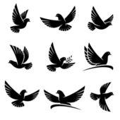Güvercin kümesi — Stok Vektör