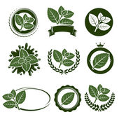 Mint leaves label set — Stock Vector