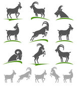 Goat animal set. — Stock Vector