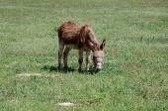Brown donkey - horizontal — Stock Photo