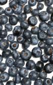Northern highbush blueberry background isolated — Stock Photo