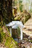Birch sap dripping in the jar — Stock Photo