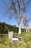 Whitewashing and tree whitening equipment in the garden — Stock Photo