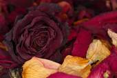 Dried flower petals as background — Stock Photo