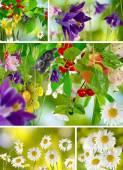 庭のクローズ アップの美しい花 — ストック写真