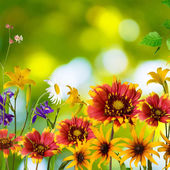 Flowers in the garden on a green background — Stock Photo