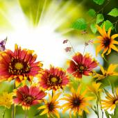 Flowers in the garden against the sun  — Stock Photo