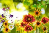Güneşe karşı parkta çiçekleri — Stok fotoğraf