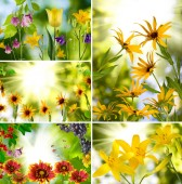 Different flowers in the garden — Stock Photo